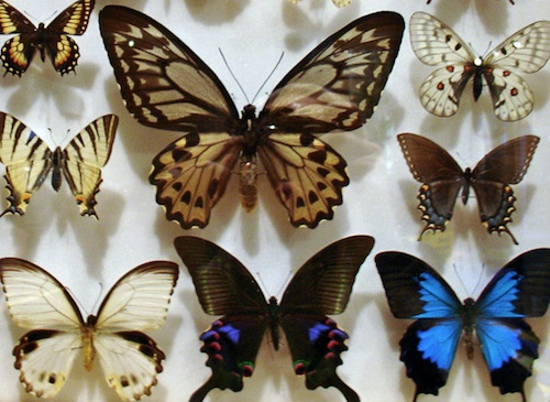 ...some butterflies...