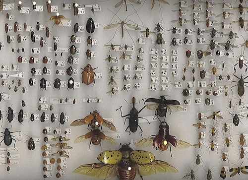 Insects galore...